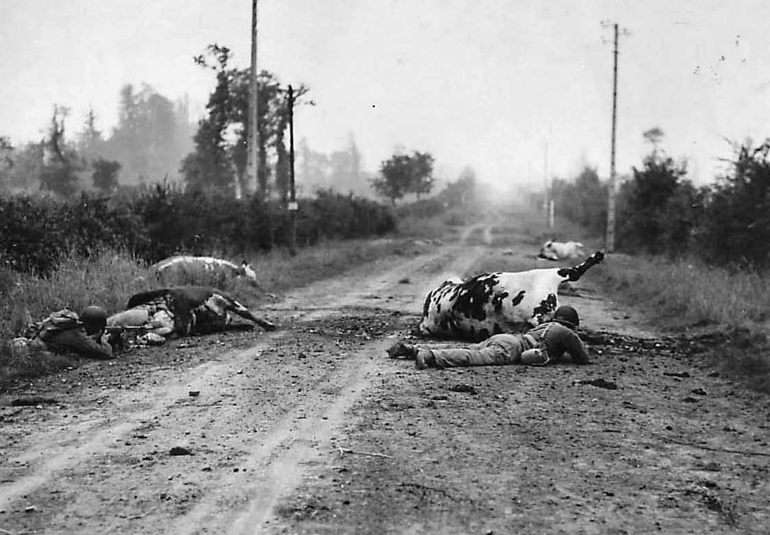 US troops use dead cows as cover on road to Perier