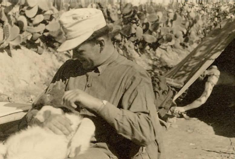Afrika korps DAK in Afrika German soldier with dog
