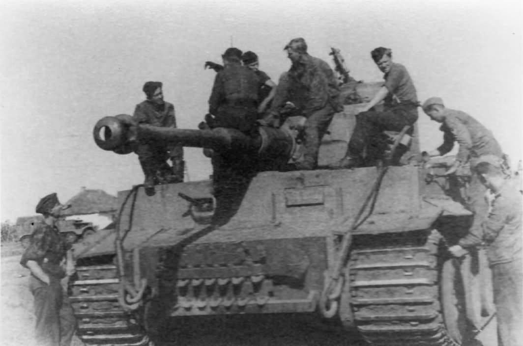 Tiger tank 24