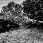 Ki-84 Hayate found by U.S. Forces on Luzon February 45 3