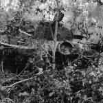 Type 97 Chi-Ha tank abandoned on Saipan