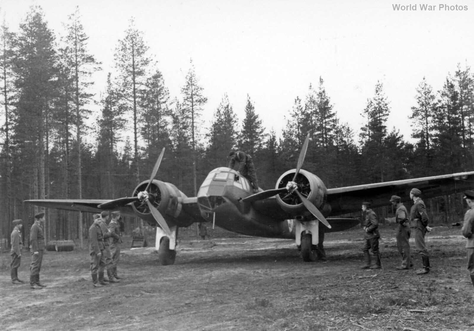Finnish Blenheim