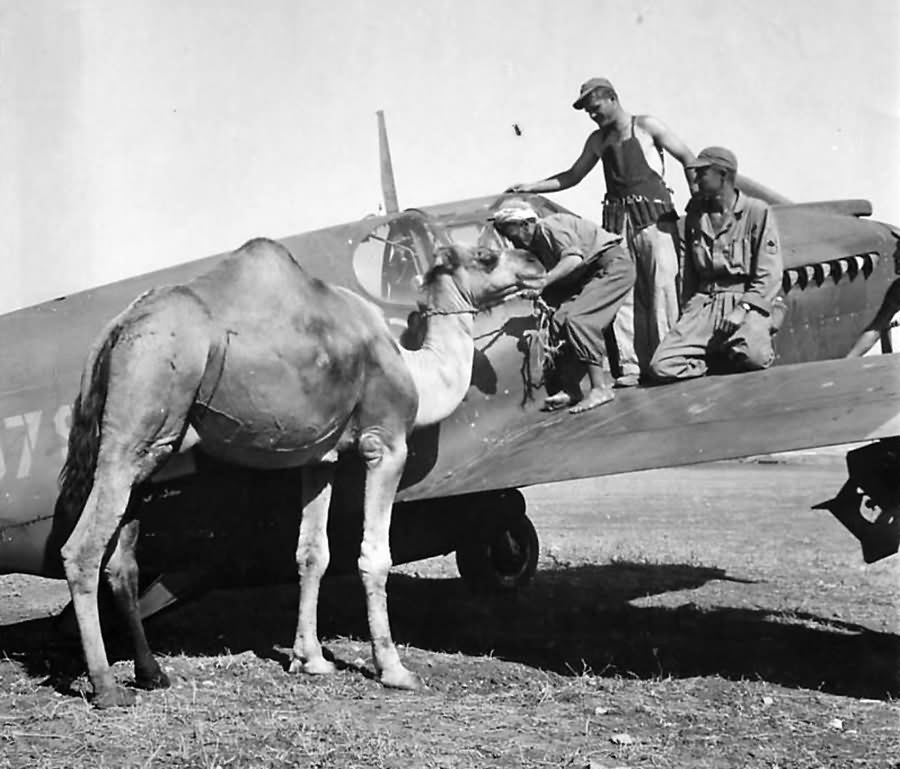 Civilian climbs off camel to peer into A-36 Apache – North Africa 1943