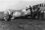 P-40 Kittyhawk RAF Africa