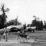 "P-47D Thunderbolt 42-25904 ""Lethal Liz II"" of the 81st FS, 50th Fighter Group code 2N-U, Carentan A-10"