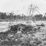 Japanese Pillbox On Biak 1944