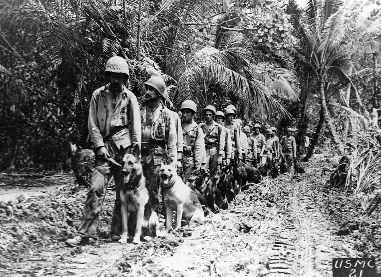 Marine raiders and war dogs vs snipers Bougainville