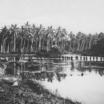 Marine Patrol In Jungle Of Guadalcanal