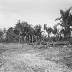 31st Division Fortifications In Aitape Jungle New Guinea 1944