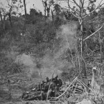 Soldiers and M4 Sherman Dozer C14 Attack Japanese Positions Peleliu