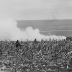 MARINES Follow Advancing SHERMAN M4 TANK on SAIPAN 1944